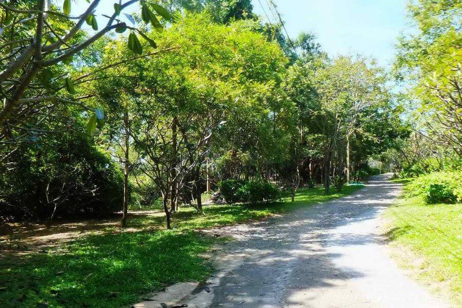 каменная дорожка в джунглях