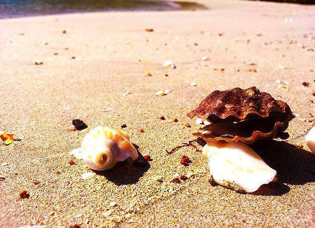 морские драгоценности