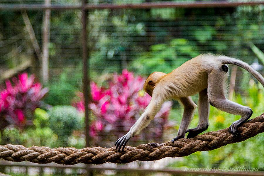 Обезьяна на верёвке