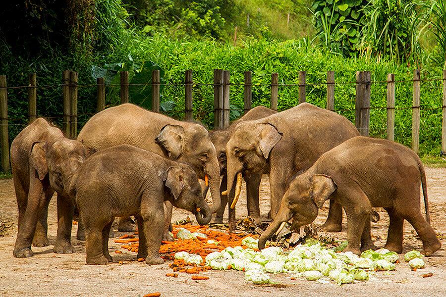 Обед слонов в зоопарке
