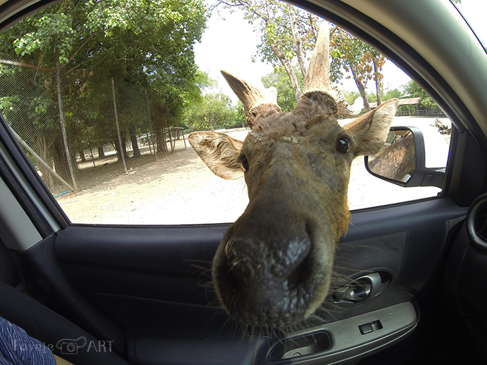 Голова оленя в машине