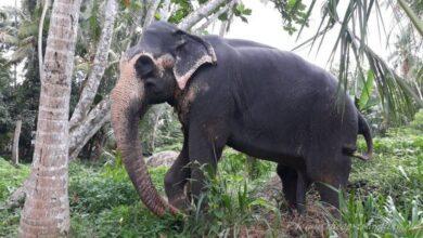 Фото Слоновий питомник «Millennium Elephant Foundation» на Шри-Ланке