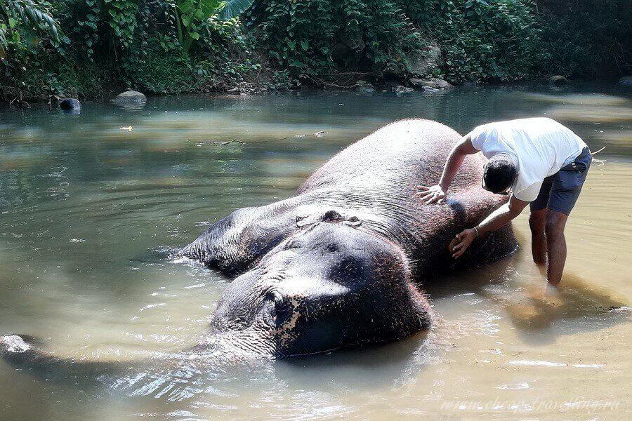 Слон отдыхает в воде