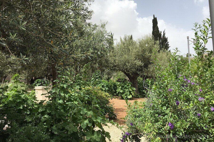 Растения на Елеонской горе