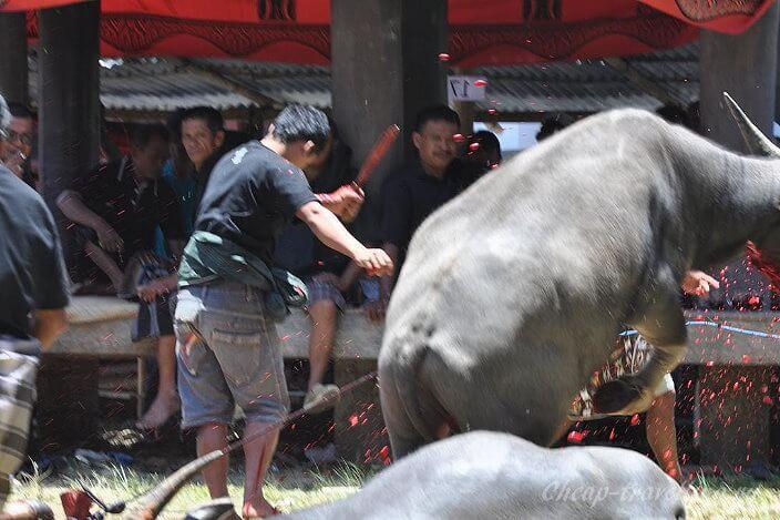 Забивание быков
